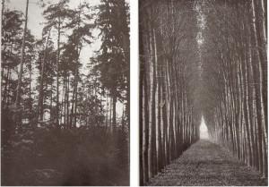 scottForestry
